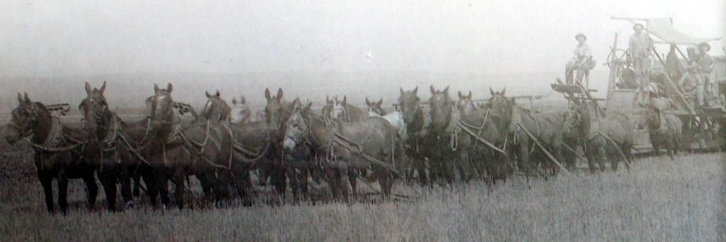 Historic Ranch harvest