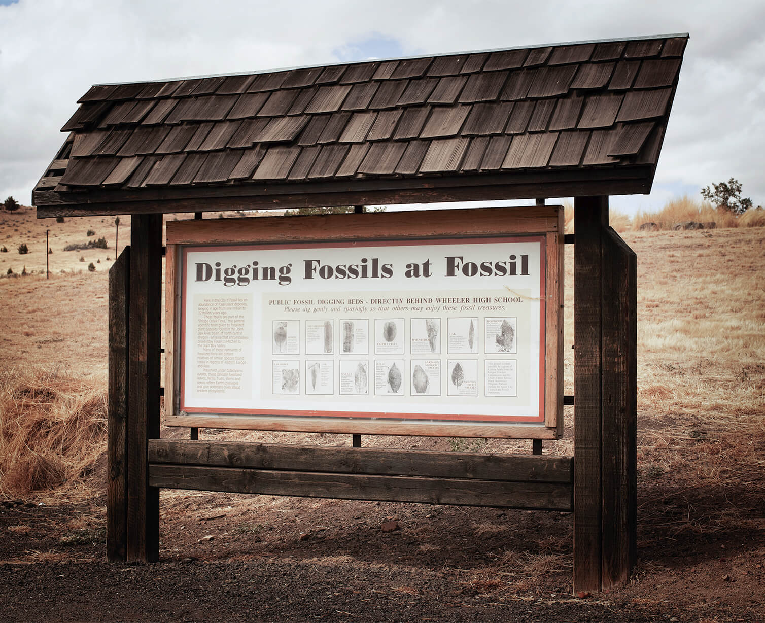 Sign about digging fossils at fossil