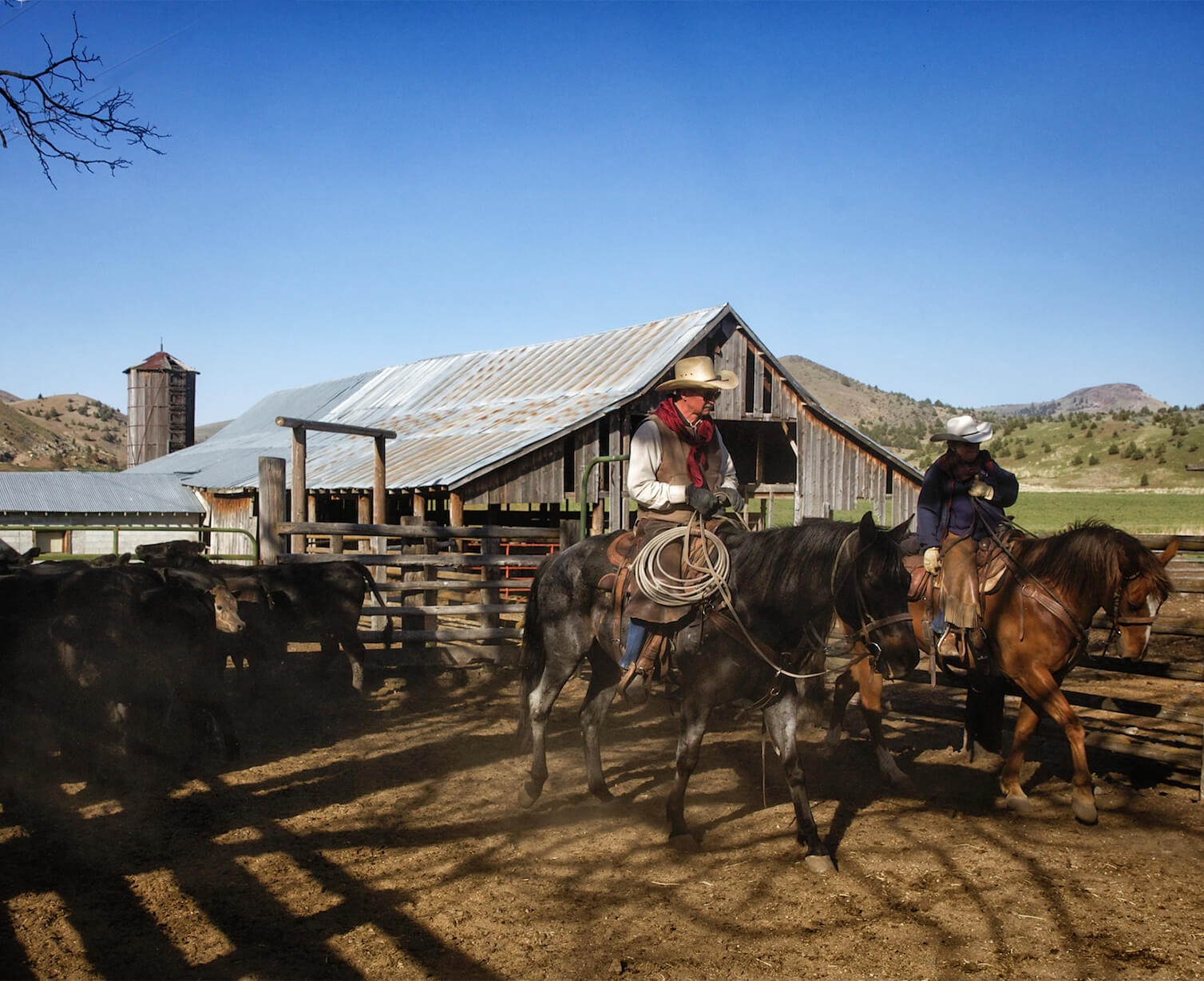 Horseback riders in front of barn and cattle