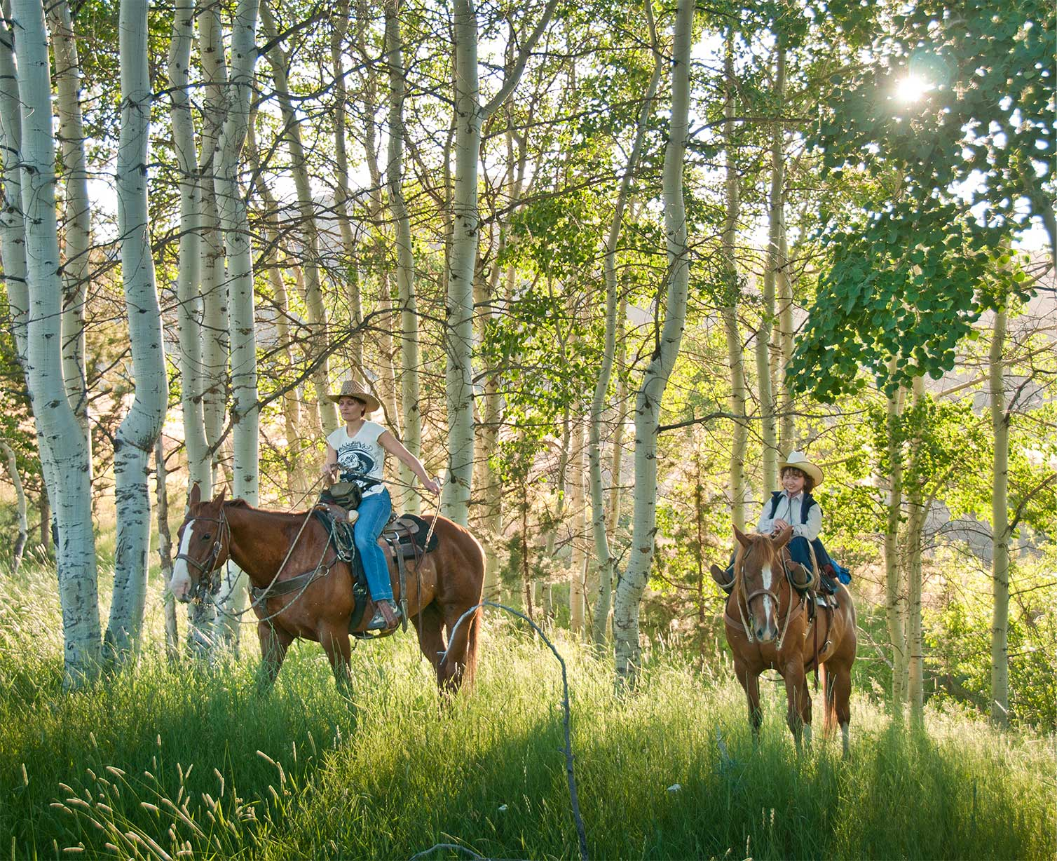 Riding horseback in an aspen grove