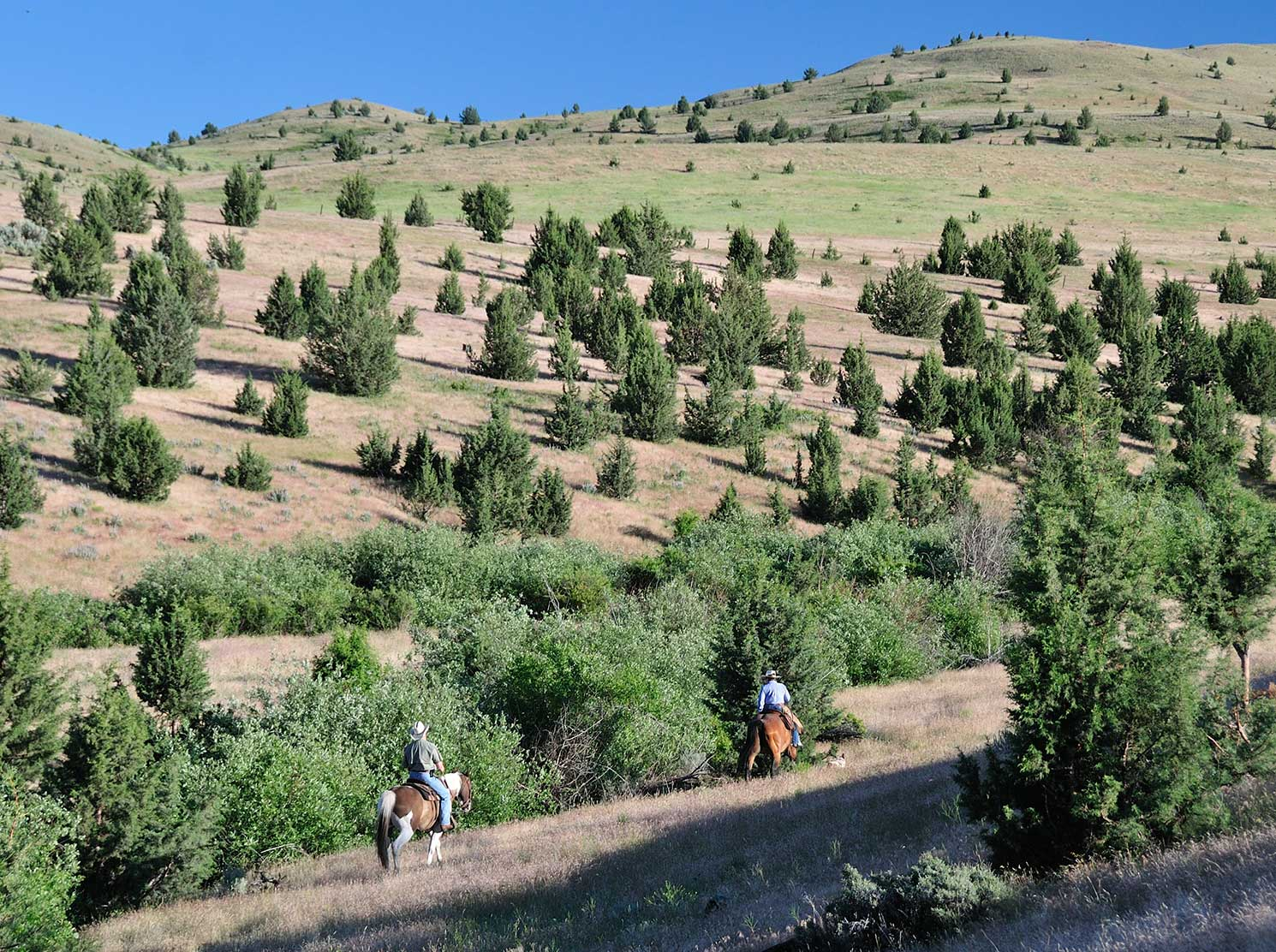 Two people riding horseback through brush dotted hills