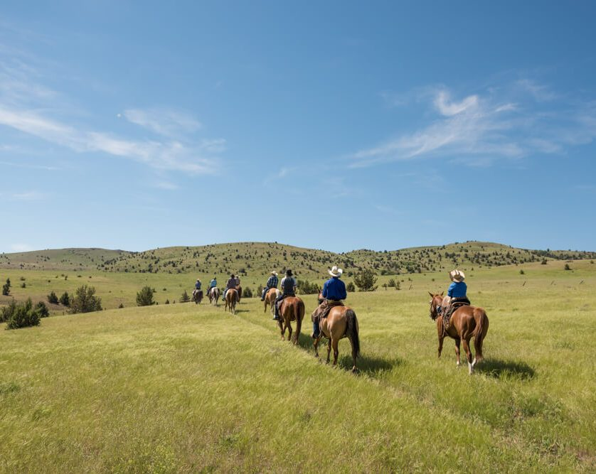 Horseback riding in a open grassy field