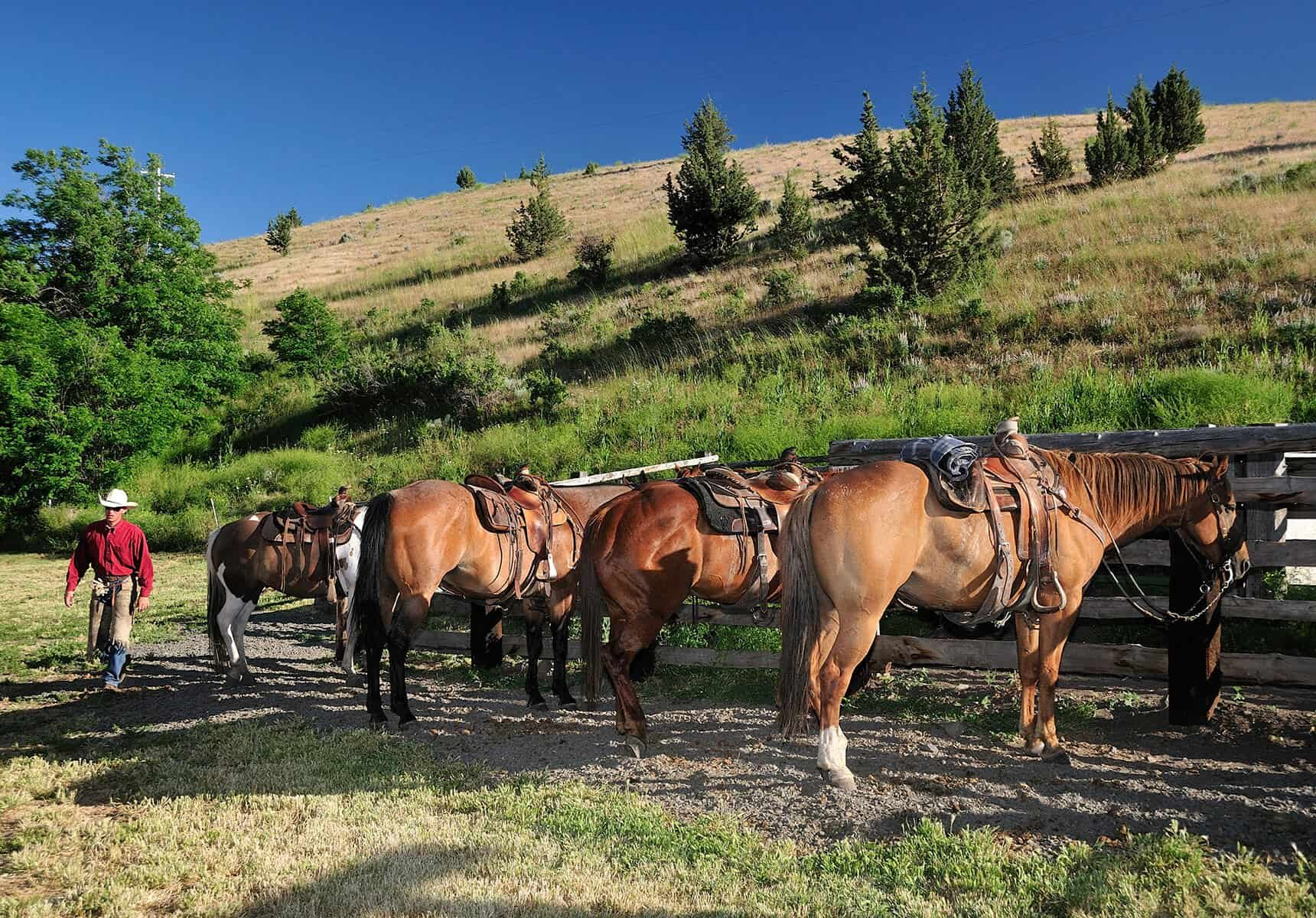 Horses at Wilson Ranches Retreat